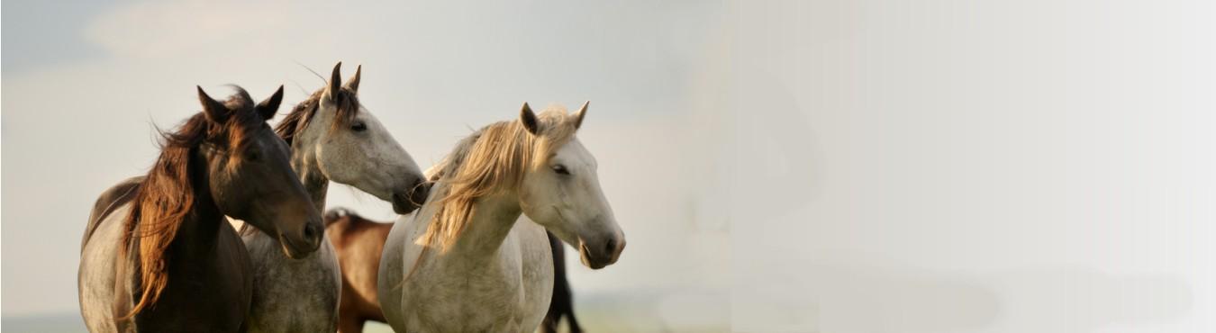 slider-horse-keep